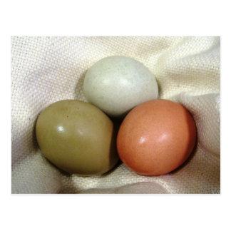 Three eggs... postcard