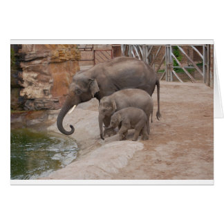 Three Elephants Card