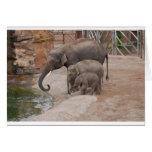 Three Elephants Greeting Card