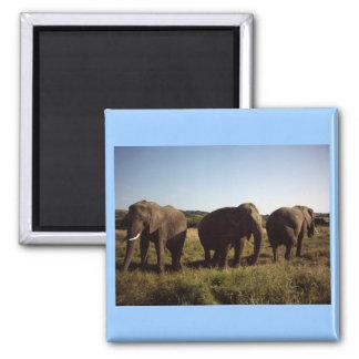 Three Elephants Magnet