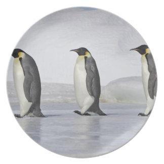 Three Emperor Penguins, Snow Hill Island Melamine Plate