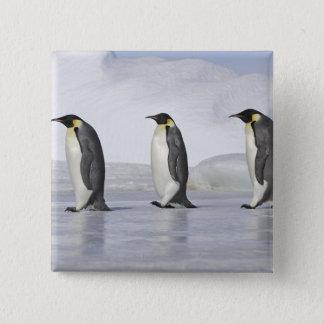 Three Emperor Penguins, Snow Hill Island Pinback Button