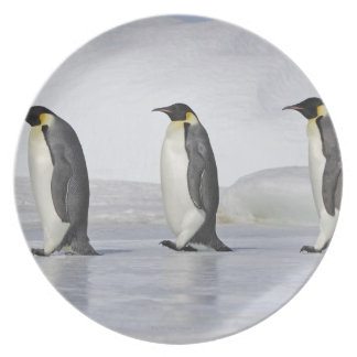 Three Emperor Penguins, Snow Hill Island Party Plates