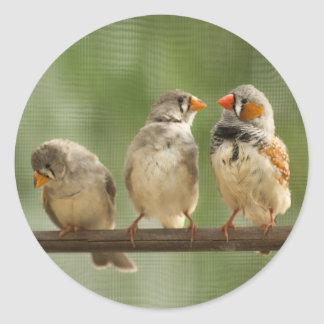 Three Finches on a Twig Classic Round Sticker