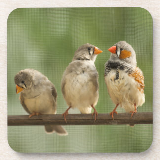Three Finches on a Twig Coaster