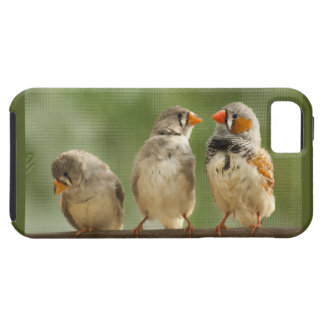 Three Finches on a Twig iPhone SE/5/5s Case