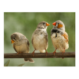 Three Finches on a Twig Postcard