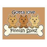 Three Finnish Spitz Postcard