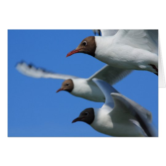 three flying gulls card