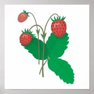 three fresh strawberries poster