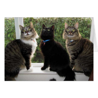 """Three Friends """"Time For Cake"""" Birthday Card"""