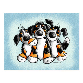 Three Funny Bernese Mountain Dogs Postcard
