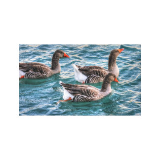 Three geese swimming in blue water canvas prints