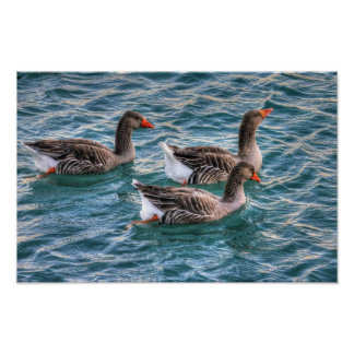 Three geese swimming in blue water print