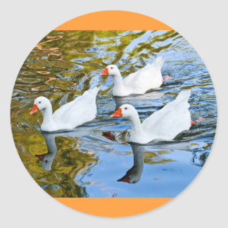 three geese swimming classic round sticker