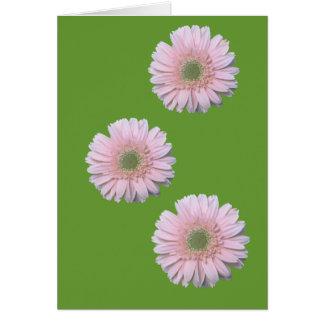 Three Gerbera Diasy Card