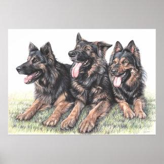 Three German Shepherds Poster