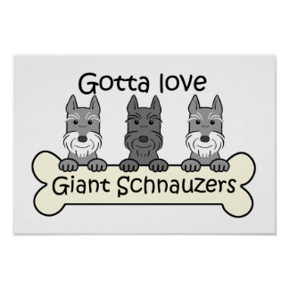 Three Giant Schnauzers Poster