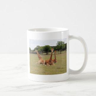 Three Giraffe at Fossil Rim Coffee Mug