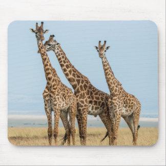 Three Giraffes Posing Mouse Pad