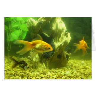 Three Goldfish Greeting Card