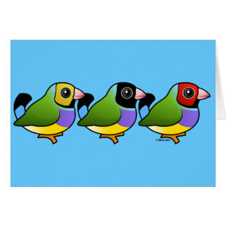 Three Gouldian Finches Greeting Card