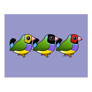 Three Gouldian Finches Postcard