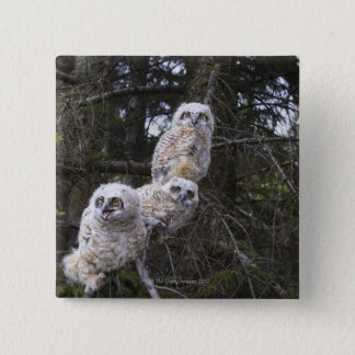 Three Great Horned Owl (Bubo Virginianus) Chicks Button