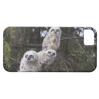 Three Great Horned Owl (Bubo Virginianus) Chicks iPhone SE/5/5s Case