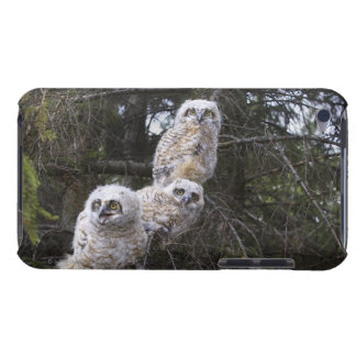 Three Great Horned Owl (Bubo Virginianus) Chicks iPod Case-Mate Case