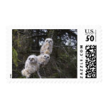Three Great Horned Owl (Bubo Virginianus) Chicks Postage