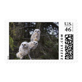 Three Great Horned Owl (Bubo Virginianus) Chicks Postage Stamps