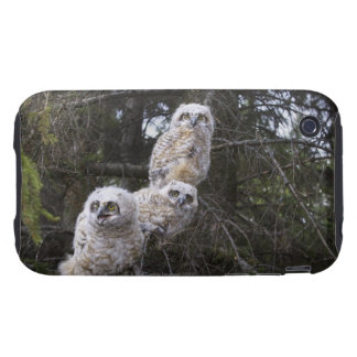 Three Great Horned Owl (Bubo Virginianus) Chicks Tough iPhone 3 Cover