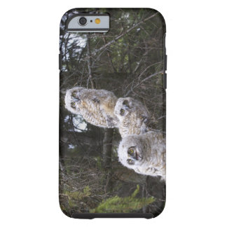 Three Great Horned Owl (Bubo Virginianus) Chicks Tough iPhone 6 Case