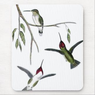 Three Green Hummingbirds Mouse Pad