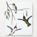 Three Green Hummingbirds Mouse Pads