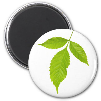 Three green leaves 2 inch round magnet