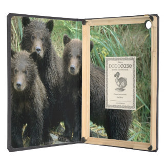 Three Grizzly Bear Cubs or Coys Cub of the Cover For iPad Air