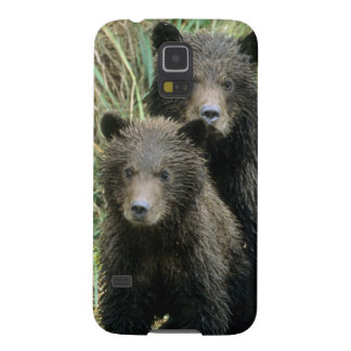 Three Grizzly Bear Cubs or Coys Cub of the Cases For Galaxy S5