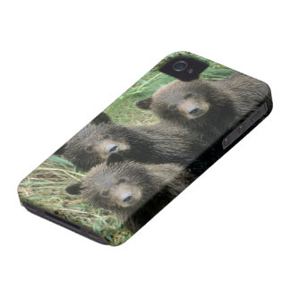 Three Grizzly Bear Cubs or Coys Cub of the iPhone 4 Case