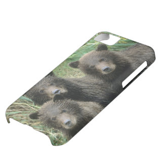 Three Grizzly Bear Cubs or Coys Cub of the iPhone 5C Covers