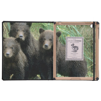 Three Grizzly Bear Cubs or Coys Cub of the Covers For iPad
