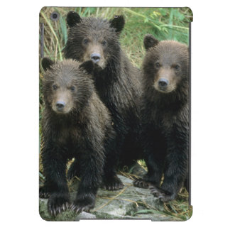 Three Grizzly Bear Cubs or Coys Cub of the Case For iPad Air
