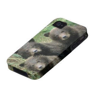 Three Grizzly Bear Cubs or Coys Cub of the iPhone 4 Cases