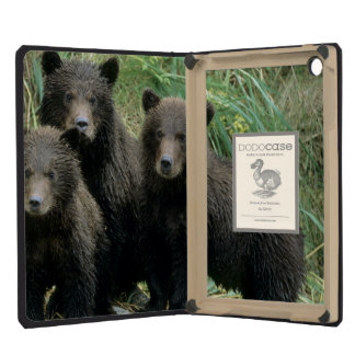 Three Grizzly Bear Cubs or Coys Cub of the iPad Mini Cover