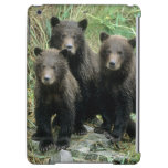 Three Grizzly Bear Cubs or Coys (Cub of the iPad Air Case