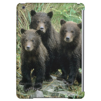 Three Grizzly Bear Cubs or Coys Cub of the iPad Air Cases