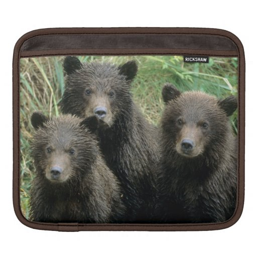 Three Grizzly Bear Cubs or Coys (Cub of the Sleeves For iPads