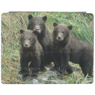 Three Grizzly Bear Cubs or Coys (Cub of the iPad Smart Cover