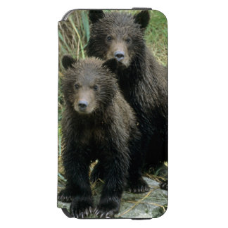 Three Grizzly Bear Cubs or Coys (Cub of the iPhone 6/6s Wallet Case
